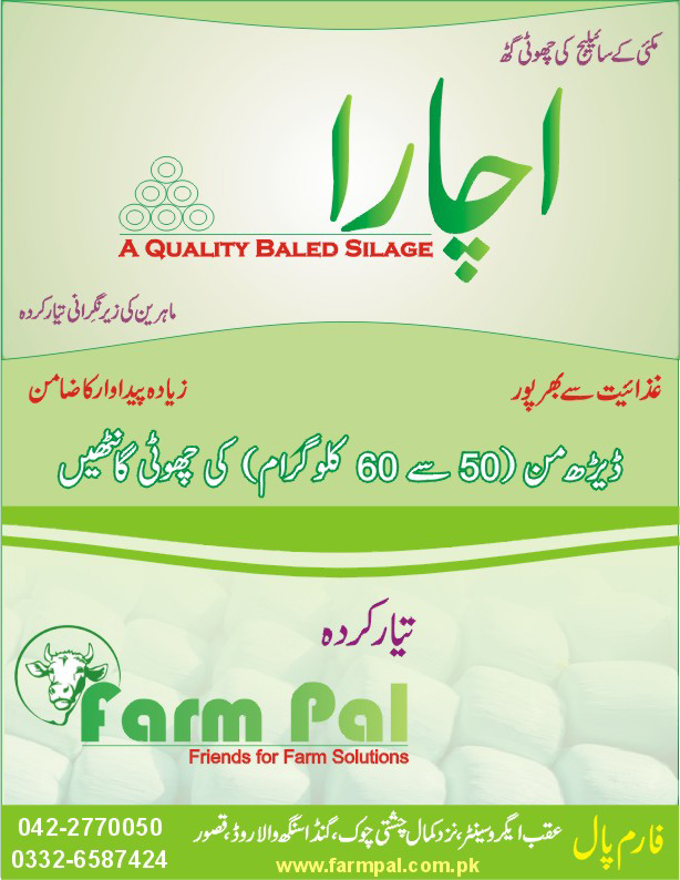 Literature of Ichara, best quality corn silage in mini bales