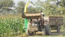 chopping of fodder with maize chopper harvester on rent for silage